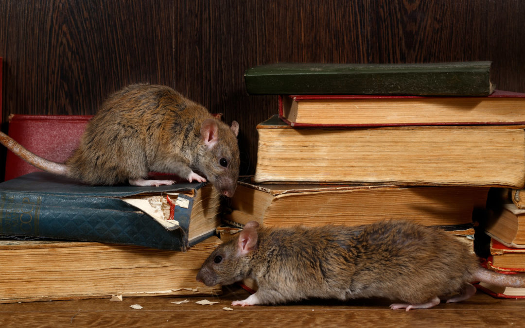 5 Signs You May Have A Rodent Problem