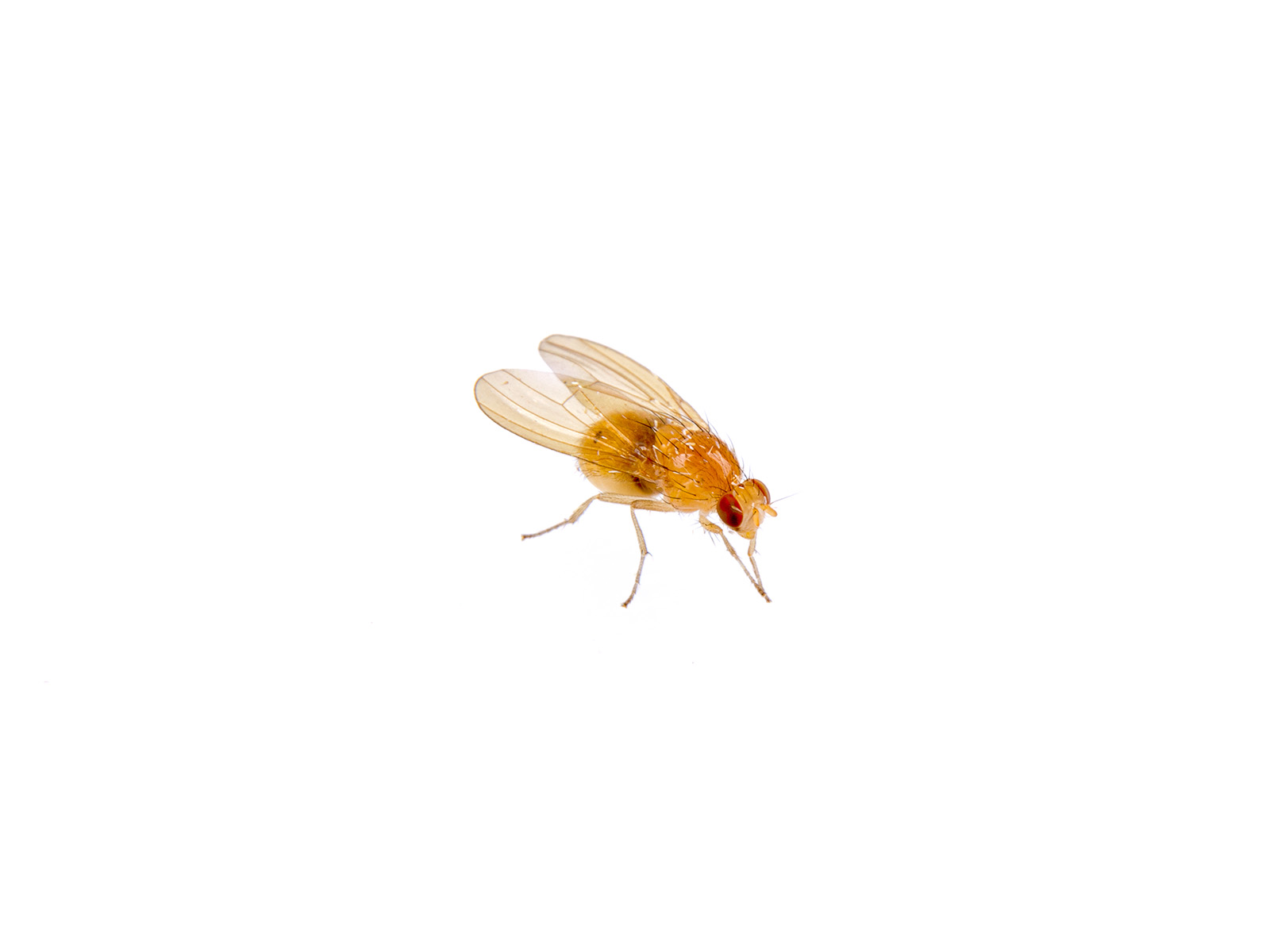 What Are These Small Brown Bugs in My House? - Masterguard ...