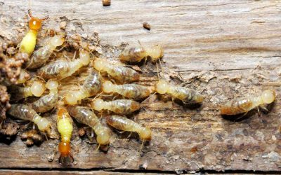 Signs Of A Termite Problem