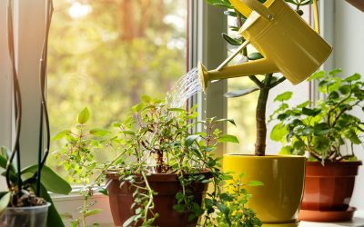 Indoor Plant Pest Control