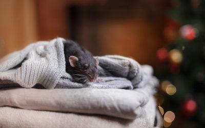 Preparing For Winter Pests