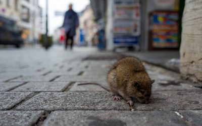 Common Pests Found In Cities